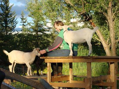 Goat Whisperer2 (2) - Copy